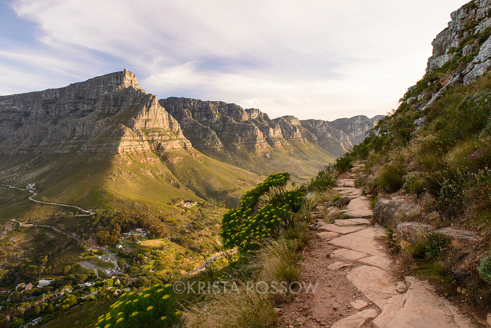View of Table Mountain and the Twelve Apostles from the hiking path which leads up to the summit of Lion's Head in Cape Town, South Africa.