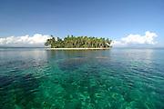 Coconut Palm at Litle Island San<br />  Blas Archipelago,Panama C.A.