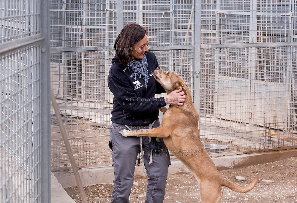 A dog celebrating a kennel worker of the municipal kennel Muratella. <br /> The kennel Muratella hosts about 1600 dogs and cats is one of the largest in Europe.<br />  April 27, 2016 in Rome, Italy. (Photo by Stefano Montesi / Corbis via Getty Images)