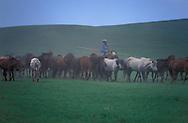 Mongolia. nomads and cattle breeder. landscapes on the road to Ulanbaatar  Hahorin       / nomades et troupeaux sur la route de Oulan Bator a   Karakorum  Mongolie   /     L0009377  /  R20582  /  P118339