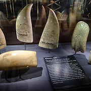 Collection of scrimshaw sperm whale teeth on display at the Nantucket Whaling Museum