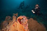 Scuba diver views a scorpion fish on Roatan, Honduras at Spooky Channel dive site.