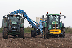 OCT 8 2012  Lincolnshire Worst Potato Harvest in Decades