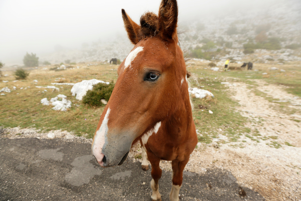A horse at Biokovo mountain Nature Park, Croatia.