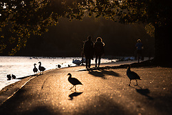 © Licensed to London News Pictures. 01/10/2018. London, UK. Sunrise in Hyde Park this morning. Temperatures in the capital were cold this morning, but are set to reach over 20 degrees Celsius later this week, higher than average for the time of year. Photo credit : Tom Nicholson/LNP