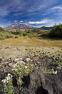 Mt. St. Helens from the lahar or ash flow that destroyed the Toutle River Valley in the eruption of 1980, Mt. St. Helens National Monument