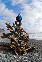 Hiker watches the sunset from a tree washed up on to Rialto Beach, Olympic National Park, Washington.