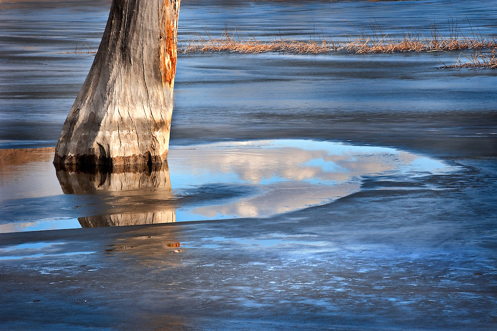 dead tree in frozen lake, Pahranagat National Wildlife Refuge
