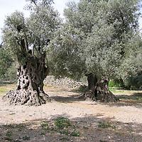 38 Zechariah
