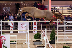 104, Maxs VB<br /> BWP Hengstenkeuring -  Lier 2020<br /> © Hippo Foto - Dirk Caremans<br />  17/01/2020