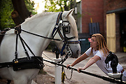 Owner of the Palmetto Carriage Company talks to one of her horses at the barn in Charleston, SC. Palmetto is one of several carriage tour companies providing horse and mule pulled carriage tours of the historic section of Charleston, SC.
