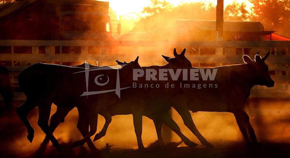 Tropa de bois ao pôr-do-sol no 12 Rodeio Internacional do Mercosul, um dos maiores eventos do gênero. FOTO: Jefferson Bernardes/Preview.com