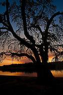 Tree by The Lake at Furman University