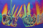 Polarized light photograph of ice crystals. Under polarized light the ice appears to have many colors within it. The colors are due to the ice crystals being birefringent in polarized light.