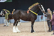 Shire Horse Society National Show 2016