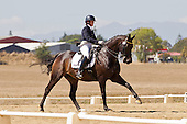 North Island Dressage Champs