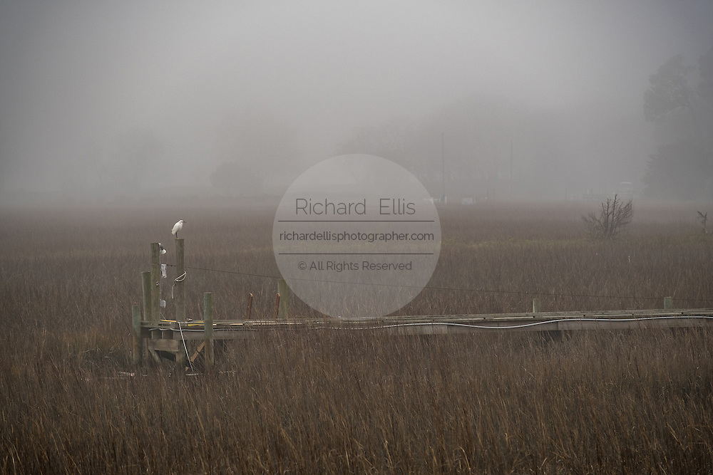An egret sits at the end of a dock on a foggy winter morning in Charleston, South Carolina.