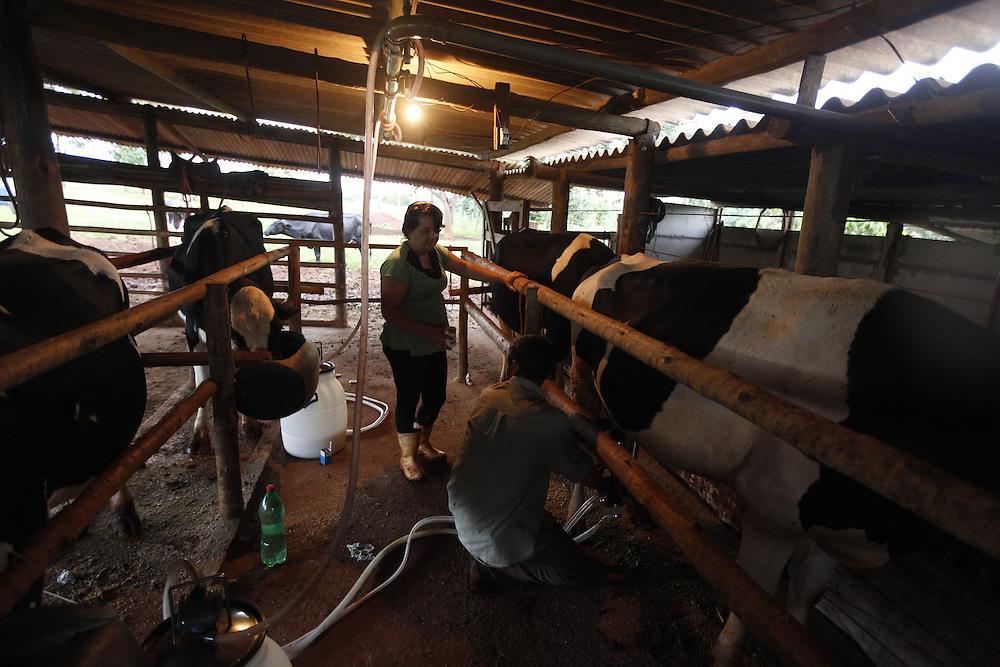 Uberlandia_MG, Brasil.<br /> <br /> Producao de leite com apoio da EMATER em Uberlandia, Minas Gerais.<br /> <br /> Milk production with support from EMATER in Uberlandia, Minas Gerais.<br /> <br /> Foto: LEO DRUMOND / NITRO
