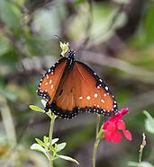 Wells Branch Butterfly Garden