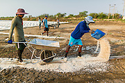 "28 MARCH 2014 - NA KHOK, SAMUT SAKHON, THAILAND: Salt workers throw down salt to create a path to drying piles near an evaporation pond in Samut Sakon province. Thai salt farmers south of Bangkok are experiencing a better than usual year this year because of the drought gripping Thailand. Some salt farmers say they could get an extra month of salt collection out of their fields because it has rained so little through the current dry season. Salt is normally collected from late February through May. Fields are flooded with sea water and salt is collected as the water evaporates. Last year, the salt season was shortened by more than a month because of unseasonable rains. The Thai government has warned farmers and consumers that 2014 may be a record dry year because an expected ""El Nino"" weather pattern will block rain in mainland Southeast Asia. Salt has traditionally been harvested in tidal basins along the coast southwest of Bangkok but industrial development in the area has reduced the amount of land available for commercial salt production and now salt is mainly harvested in a small parts of Samut Songkhram and Samut Sakhon provinces.    PHOTO BY JACK KURTZ"