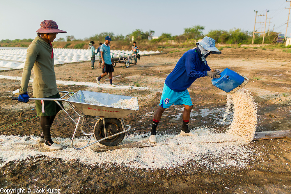 """28 MARCH 2014 - NA KHOK, SAMUT SAKHON, THAILAND: Salt workers throw down salt to create a path to drying piles near an evaporation pond in Samut Sakon province. Thai salt farmers south of Bangkok are experiencing a better than usual year this year because of the drought gripping Thailand. Some salt farmers say they could get an extra month of salt collection out of their fields because it has rained so little through the current dry season. Salt is normally collected from late February through May. Fields are flooded with sea water and salt is collected as the water evaporates. Last year, the salt season was shortened by more than a month because of unseasonable rains. The Thai government has warned farmers and consumers that 2014 may be a record dry year because an expected """"El Nino"""" weather pattern will block rain in mainland Southeast Asia. Salt has traditionally been harvested in tidal basins along the coast southwest of Bangkok but industrial development in the area has reduced the amount of land available for commercial salt production and now salt is mainly harvested in a small parts of Samut Songkhram and Samut Sakhon provinces.    PHOTO BY JACK KURTZ"""