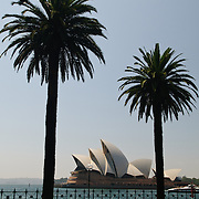 Sydney Opera House framed by silhouettes of palm trees in Dawes Point Park in Sydney's historic Rocks district