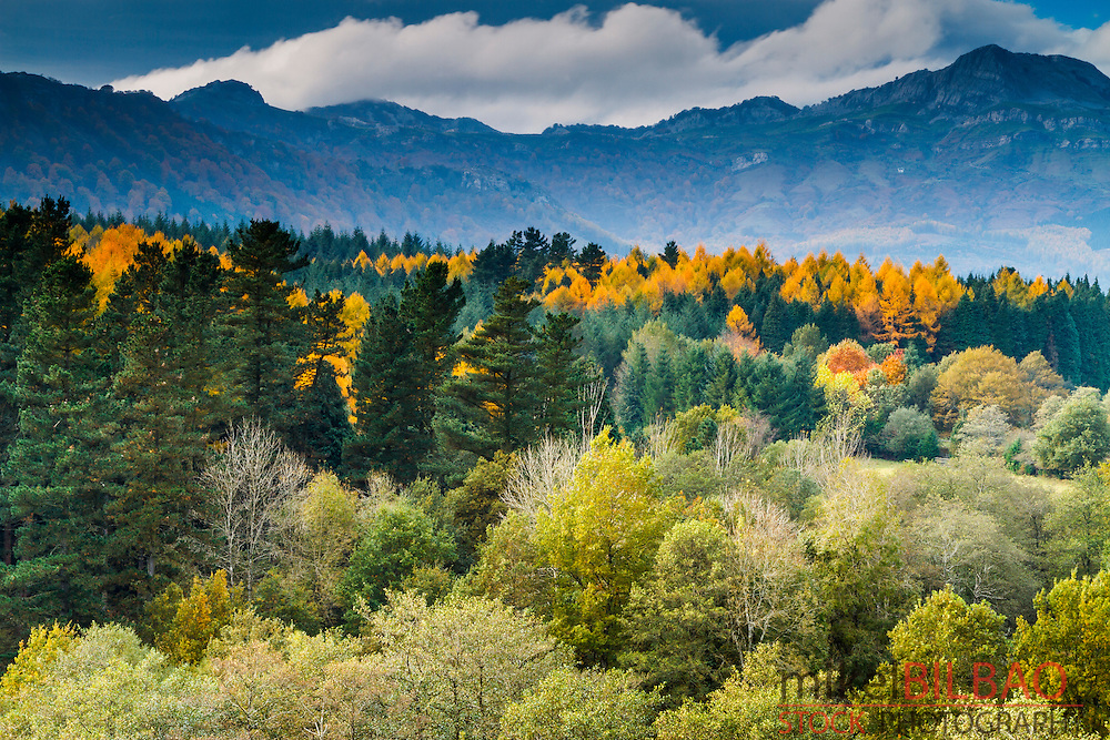 Forest landscape in autumn. Gorbeia Natural Park. Biscay, Basque Country, Spain, Europe.
