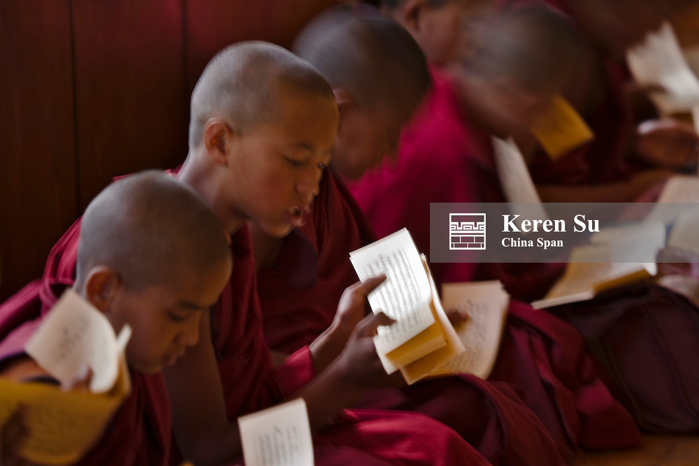 Monks studying Buddhist scriptures in the Phyang Gompa, Ladakh, India