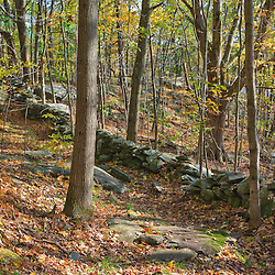 A stone wall in the woods at Wachusett Meadow Wildlife Sanctuary in Princeton, Massachusetts. Massachusetts Audubon Sanctuary. Fall.