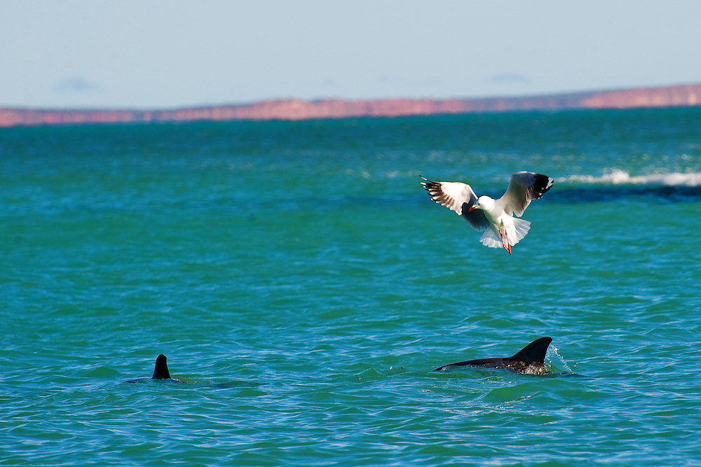 Seagull and Dolphin