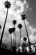 Palm trees in the sky. Naples, Italy