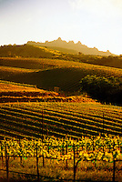 Chalone Vineyards, near Pinnacles National Monument, Monterey County, California