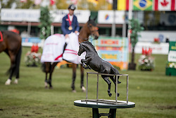 Prize<br /> CSIO 5* Spruce Meadows Masters - Calgary 2016<br /> © Hippo Foto - Dirk Caremans<br /> 11/09/16