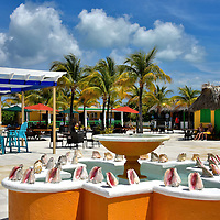 Bahamian Village Plaza at Half Moon Cay, Bahamas<br /> Inside the Welcome Center you will find a straw market that is run by women from nearby Eleuthera Island.  They take a 90 minute boat ride to Half Moon Cay whenever a ship is in port. Also available in the Bahamian Village is the Rum Runners Bar, a gift store, an excursion office, an ice cream shop and even a post office. In the center of The Plaza is this conch shell water fountain.