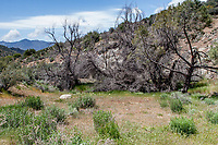 Butterfly habitat at Sherman Pass, Tulare Co, CA, USA, on 05-May-16