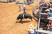14 JULY 2012 - OAK SPRINGS, AZ: A Navajo cowboy leaves the chute while he bucks out a bull Saturday afternoon on the last day of a bull riding class at the Aspen Canyon Rodeo Club in Oak Springs. The bull riding class was offered by the Crooked Horn Cattle Co. in the community of Oak Springs on the Navajo Nation, about 15 miles south of Window Rock, AZ. Eleven cowboys signed up for bull riding classes and one signed up for bull fighting classes. The bull riding class started with lessons on a mechanical bucking machine before the cowboys rode bulls.    PHOTO BY JACK KURTZ