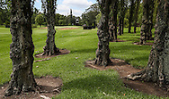 Trees to the right of the 2nd fairway the East Course, Royal Johannesburg & Kensington Golf Club, Gauteng, Johannesburg, South Africa.  11/01/2016. Picture: Golffile | David Lloyd<br /> <br /> All photos usage must carry mandatory copyright credit (© Golffile | David Lloyd)