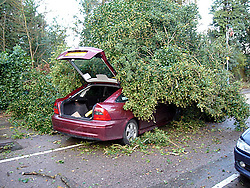 © Licensed to London News Pictures. 05/01/2012 Borehamwood, UK.. A fallen tree in Shenley Village, Borehamwood, Herts after it collapsed onto a car injuring a mother and young girl as high winds and storms continued to batter the UK..Photo credit : LNP