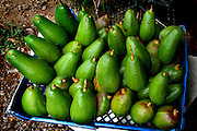 Costa Rica, Caldera, Pacific Coast, Fruit Stand, Avocado