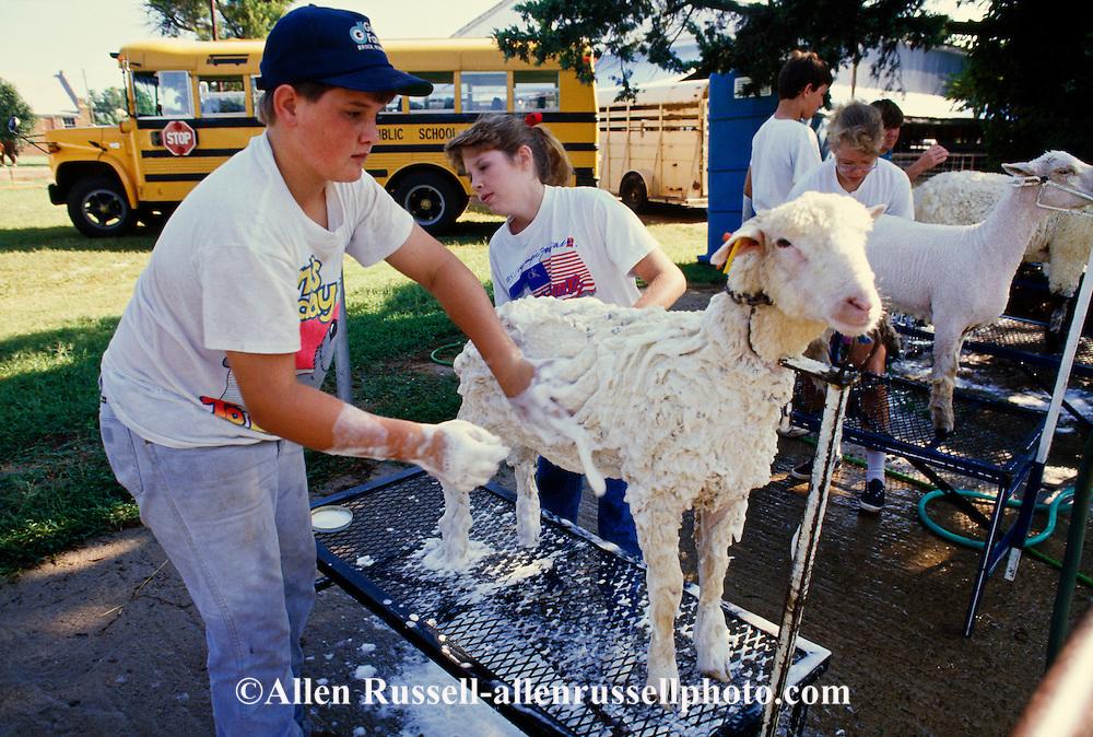 Kids prepare sheep for county fair livestock show, Hydro, Oklahoma
