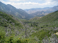 San Gabriel Mountains Chaparral at Grizzly Flat, Angeles NF, Los Angeles Co, CA, USA, on 22-May-16
