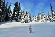 USA, Idaho, Valley County, Tamarack Resort, Spruce Forest on Ridge of West Mountain