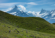 Schreckhorn (left) and Finsteraarhorn (right) rise impressively above Grindelwald, in Switzerland, the Alps, Europe. The Finsteraarhorn (4274 m / 14,022 ft) is the highest mountain in the Bernese Alps and the most prominent peak of Switzerland (in terms of the lowest topographic contour at the mountain's base). The Schreckhorn (4078 m / 13,379 ft) is the northernmost summit rising above 4000 meters in Europe. This whole massif and surrounding glaciers were designated as part of UNESCO's Jungfrau-Aletsch World Heritage Site.