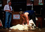 Bevan Guy NZ Shearer<br />
