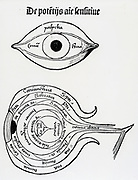 Diagram of the human eye. Woodcut from 'Margarita philosophica', 1508.
