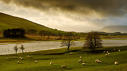 Flooded fields after heavy rain near Broughton in the Scottish Borders<br /> <br /> (c) ANDREW WILSON | www.EdinburghElitemedia.co.uk