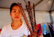SHENYANG, CHINA - JULY 10: (CHINA OUT) <br /> <br /> Insect Feast <br /> <br /> A girl holds chilopod skewers during Shenyang Summer Food Festival  in Shenyang, Liaoning province of China. <br /> ©Exclusivepix