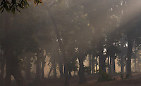 Beams of sun light & early morning mist in sal forest, Bardia National Park, Nepal