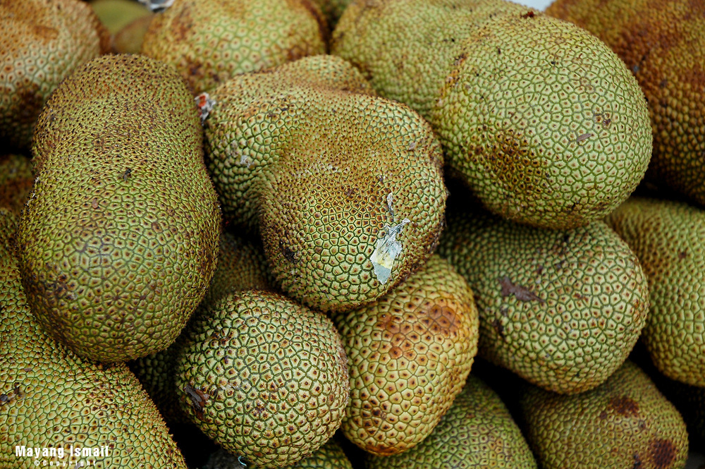 Chempedak, a family of the Jackfruit.