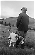 COMPETITORS HOLD THEIR HOUNDS PRIOR TO A TRAIL RACE AT BENTPATH AGRICULTURAL SHOW, BENTPATH, NEAR LOCKERBIE. SATURDAY 2.9.00.©JEREMY SUTTON-HIBBERT 2000..